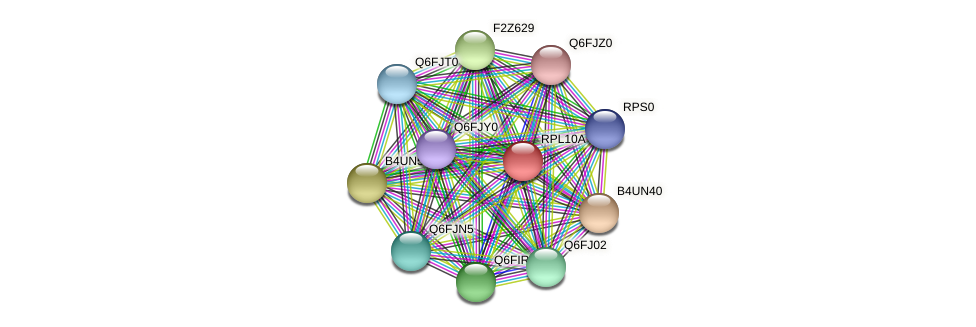 RPL10A protein (Candida glabrata) - STRING interaction network