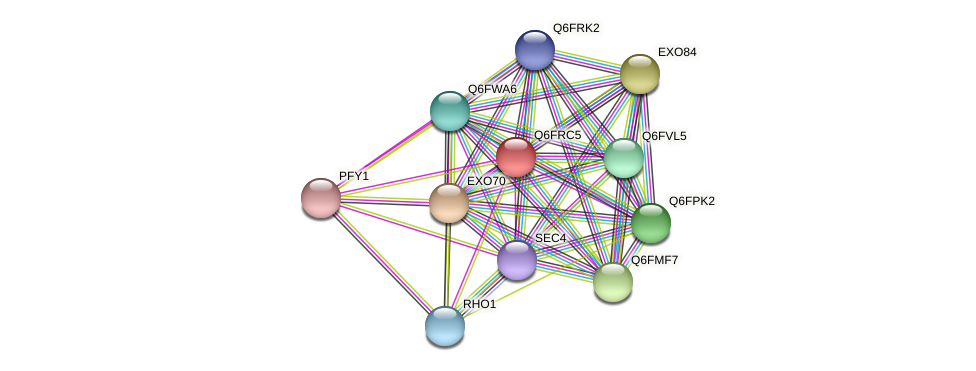 XP_447219.1 protein (Candida glabrata) - STRING interaction network