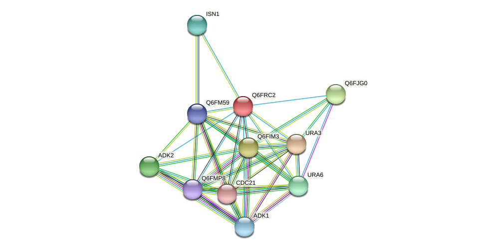 XP_447222.1 protein (Candida glabrata) - STRING interaction network