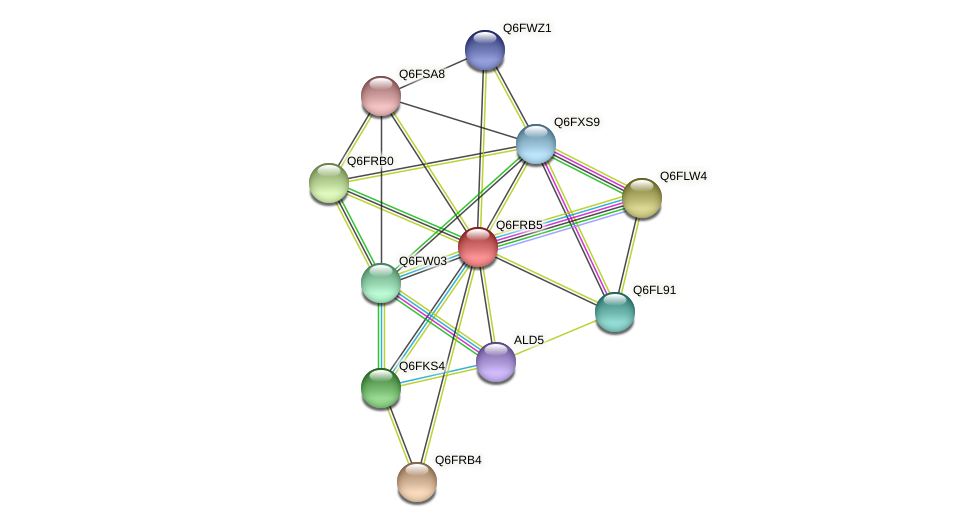 XP_447229.1 protein (Candida glabrata) - STRING interaction network