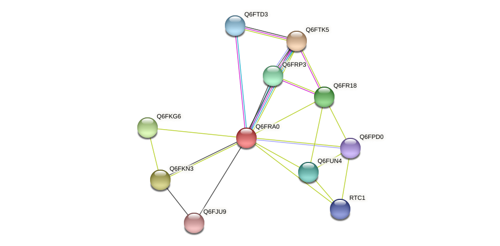 XP_447244.2 protein (Candida glabrata) - STRING interaction network