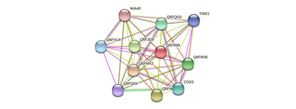 XP_447245.1 protein (Candida glabrata) - STRING interaction network