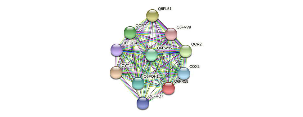 XP_447286.1 protein (Candida glabrata) - STRING interaction network
