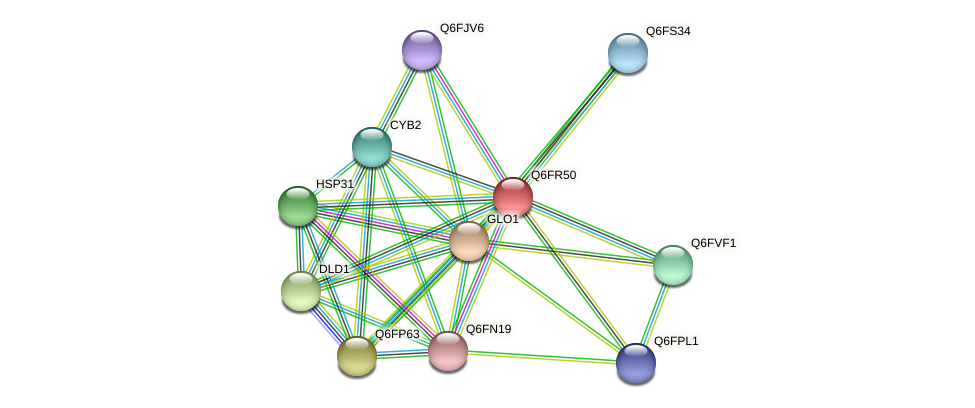 XP_447294.1 protein (Candida glabrata) - STRING interaction network