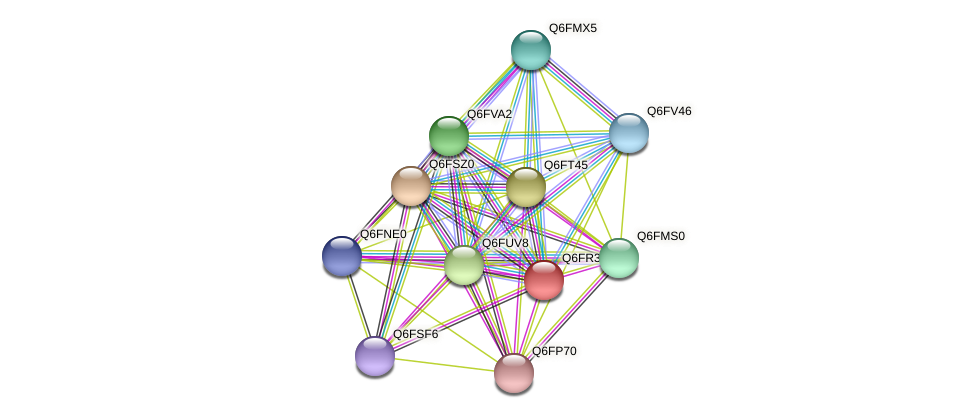 XP_447306.1 protein (Candida glabrata) - STRING interaction network