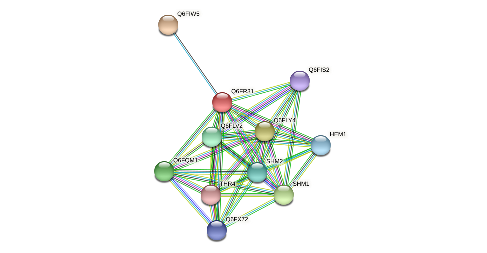 XP_447313.1 protein (Candida glabrata) - STRING interaction network