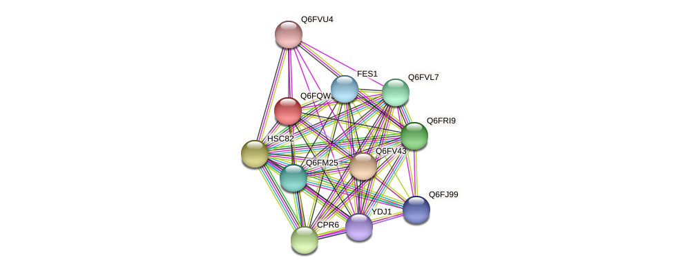 XP_447381.1 protein (Candida glabrata) - STRING interaction network