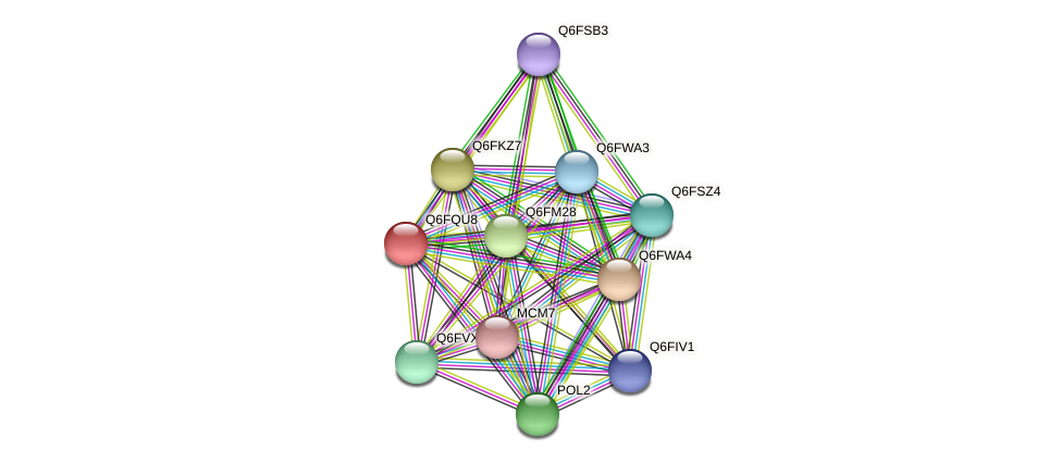 XP_447396.1 protein (Candida glabrata) - STRING interaction network
