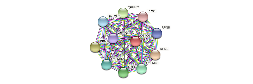 XP_447408.1 protein (Candida glabrata) - STRING interaction network