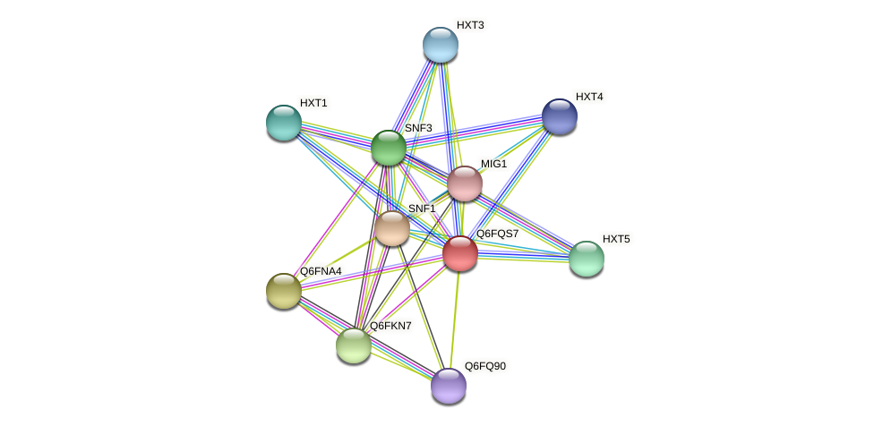XP_447417.1 protein (Candida glabrata) - STRING interaction network