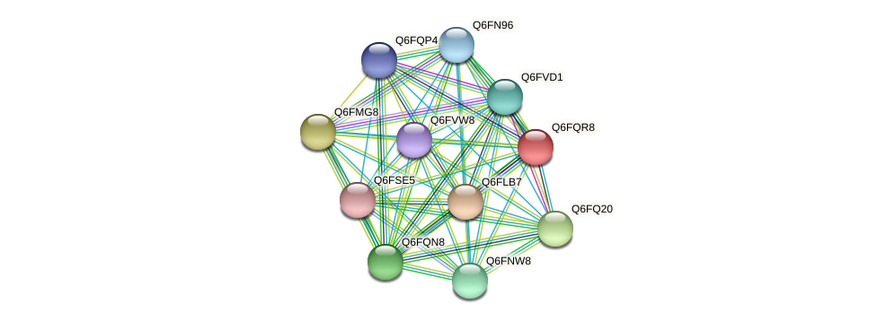 XP_447426.1 protein (Candida glabrata) - STRING interaction network