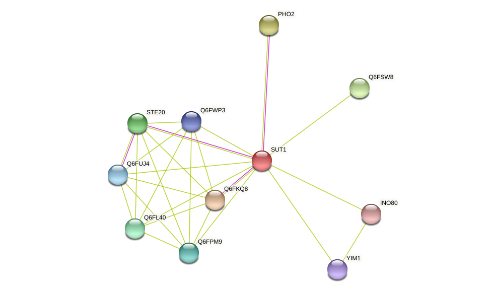 XP_447433.1 protein (Candida glabrata) - STRING interaction network