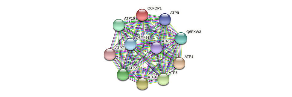 XP_447453.1 protein (Candida glabrata) - STRING interaction network
