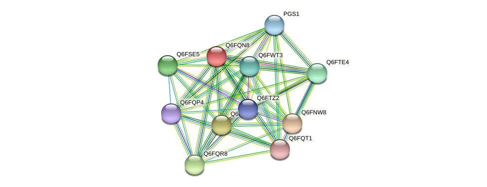 XP_447456.1 protein (Candida glabrata) - STRING interaction network