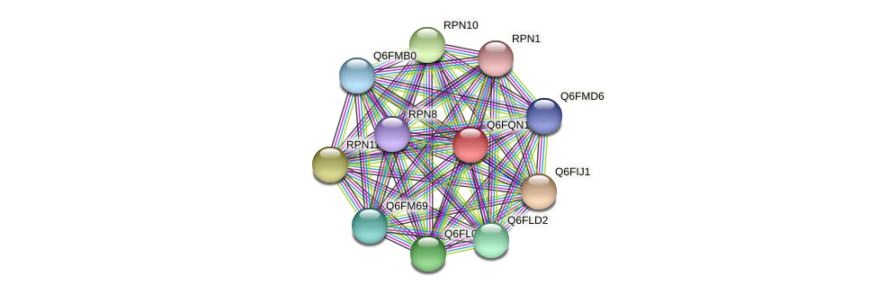 XP_447463.1 protein (Candida glabrata) - STRING interaction network