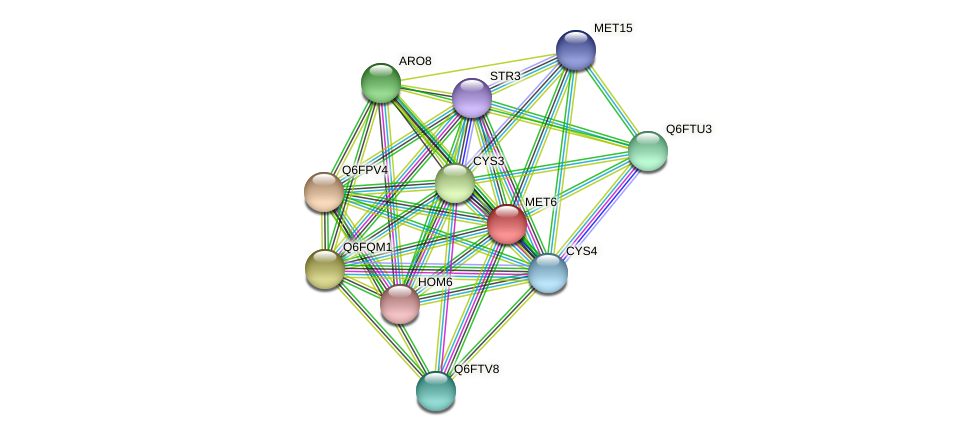 MET6 protein (Candida glabrata) - STRING interaction network