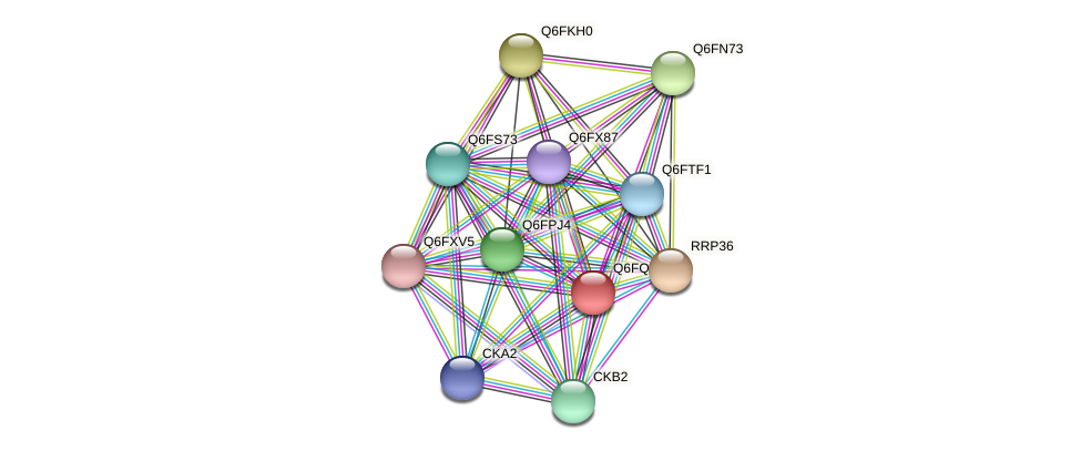 XP_447476.1 protein (Candida glabrata) - STRING interaction network