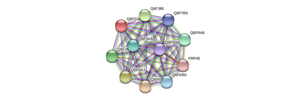 XP_447496.1 protein (Candida glabrata) - STRING interaction network