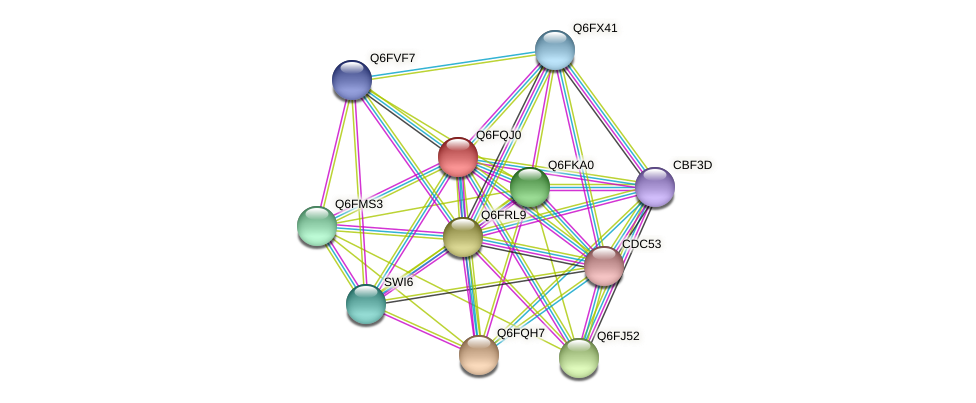 XP_447504.1 protein (Candida glabrata) - STRING interaction network