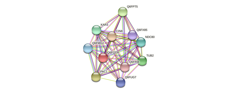 XP_447555.1 protein (Candida glabrata) - STRING interaction network