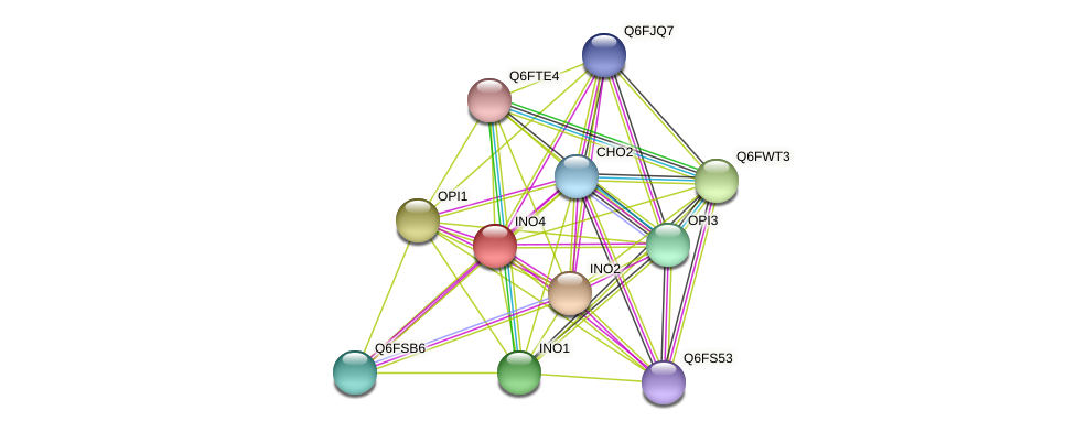 INO4 protein (Candida glabrata) - STRING interaction network