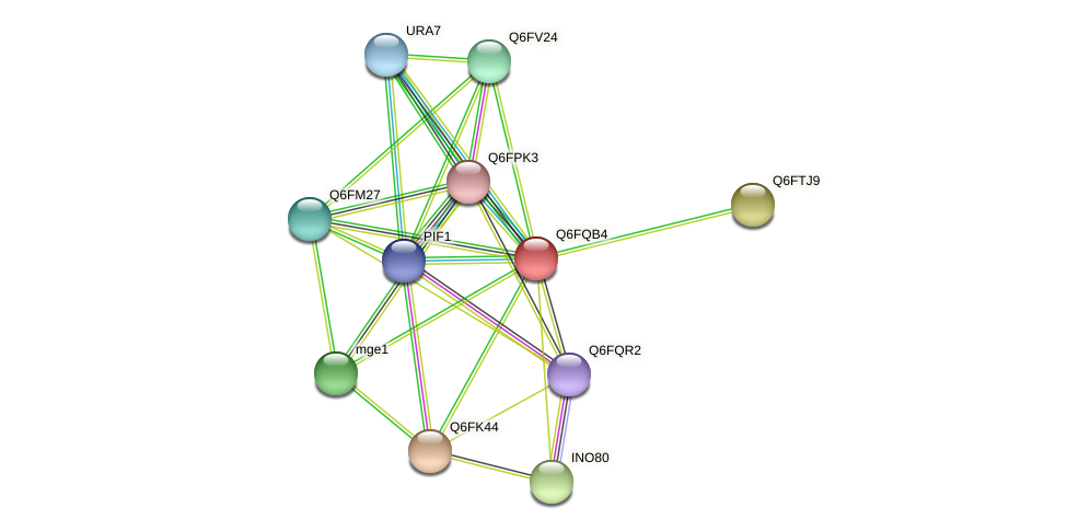 XP_447580.1 protein (Candida glabrata) - STRING interaction network