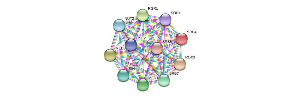 SRB4 protein (Candida glabrata) - STRING interaction network