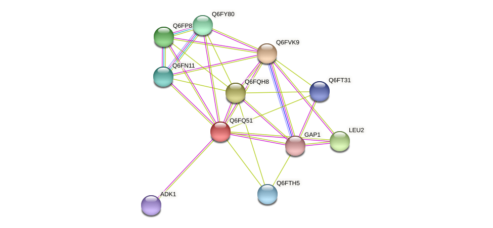 XP_447643.1 protein (Candida glabrata) - STRING interaction network