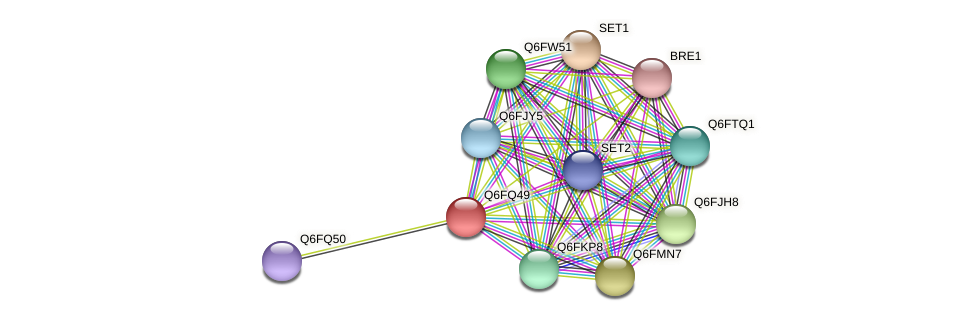 XP_447645.1 protein (Candida glabrata) - STRING interaction network