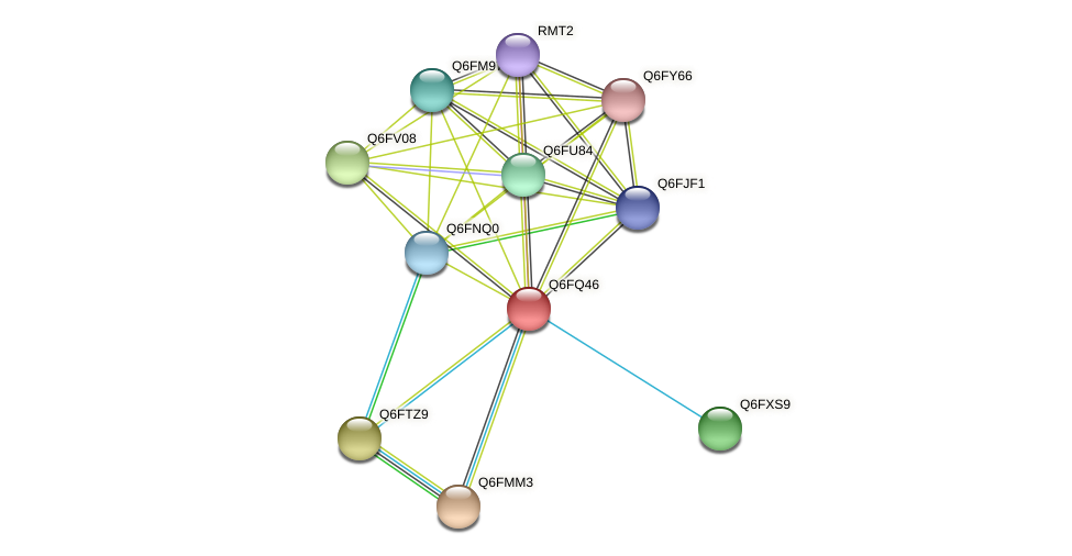 XP_447648.1 protein (Candida glabrata) - STRING interaction network