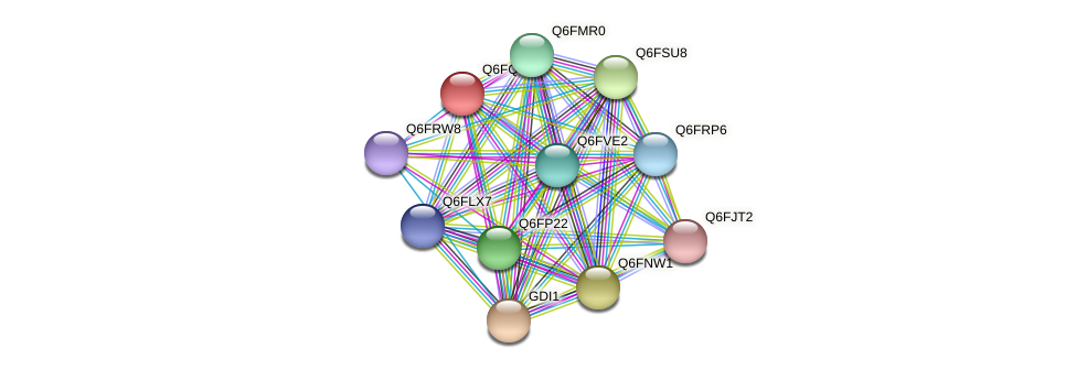 XP_447651.1 protein (Candida glabrata) - STRING interaction network