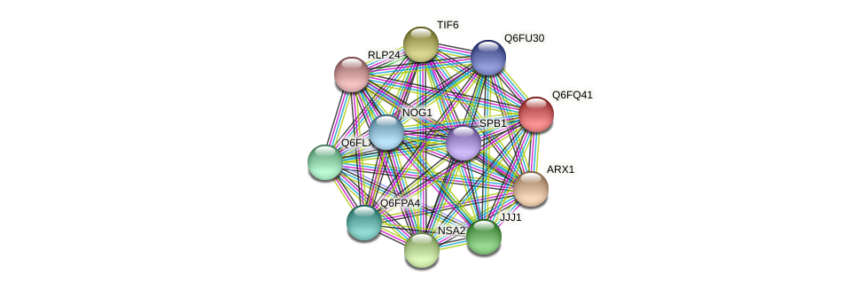 XP_447653.1 protein (Candida glabrata) - STRING interaction network