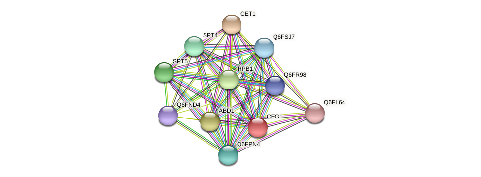CEG1 protein (Candida glabrata) - STRING interaction network