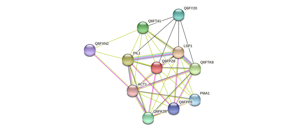 XP_447696.1 protein (Candida glabrata) - STRING interaction network