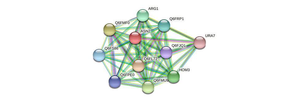 ASN2 protein (Candida glabrata) - STRING interaction network