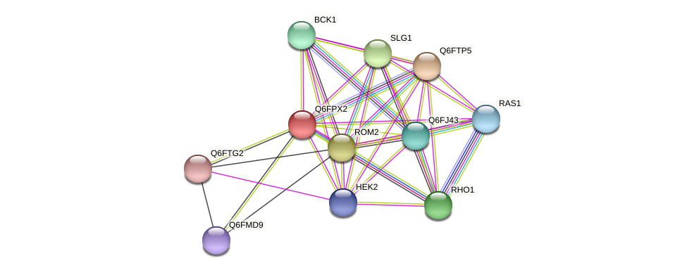XP_447722.1 protein (Candida glabrata) - STRING interaction network