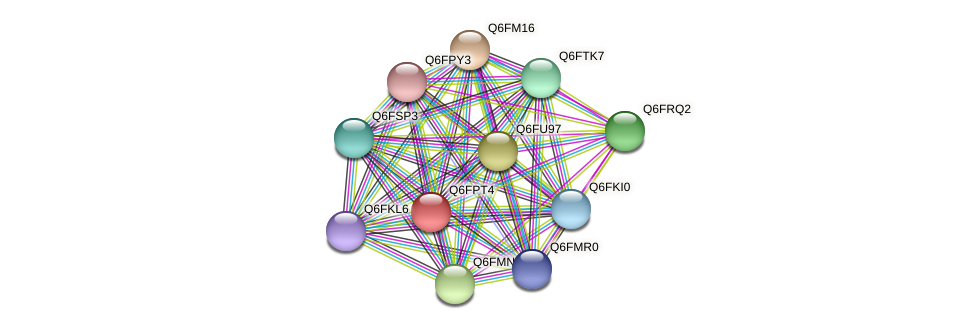 XP_447760.1 protein (Candida glabrata) - STRING interaction network