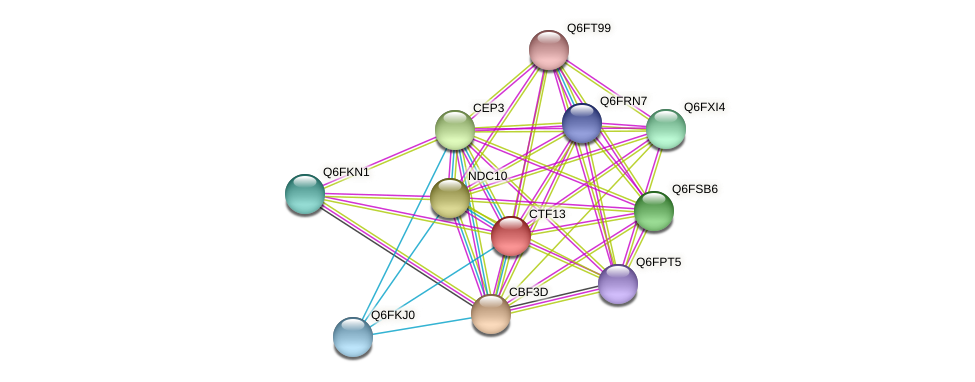 CTF13 protein (Candida glabrata) - STRING interaction network