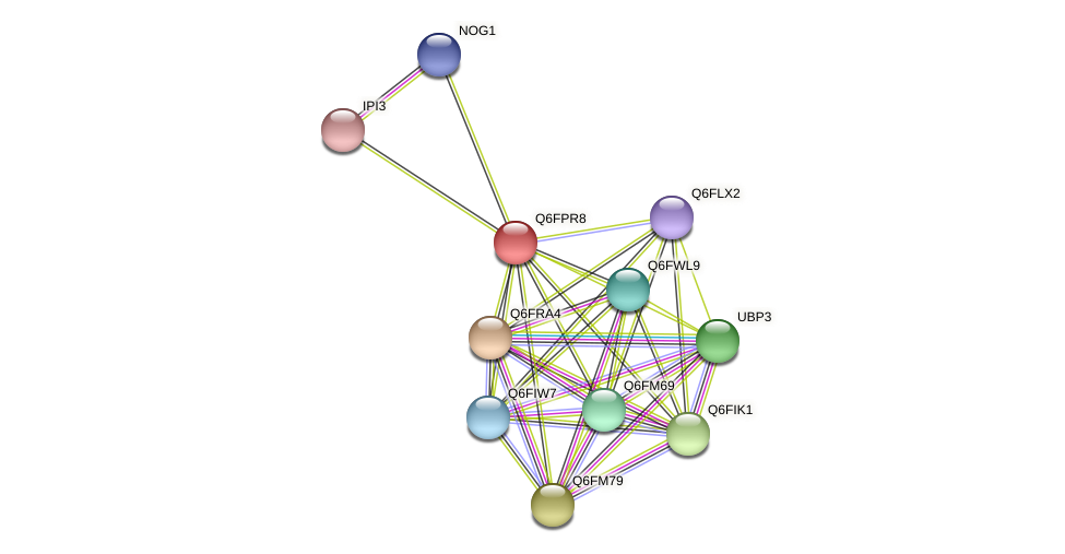 XP_447776.1 protein (Candida glabrata) - STRING interaction network