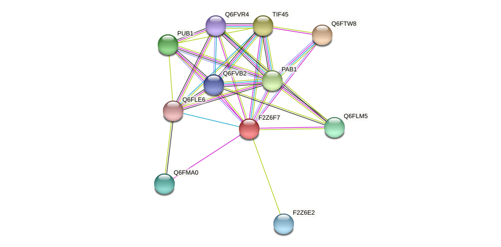 XP_447800.1 protein (Candida glabrata) - STRING interaction network