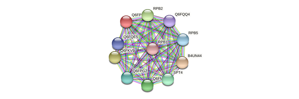 XP_447810.1 protein (Candida glabrata) - STRING interaction network