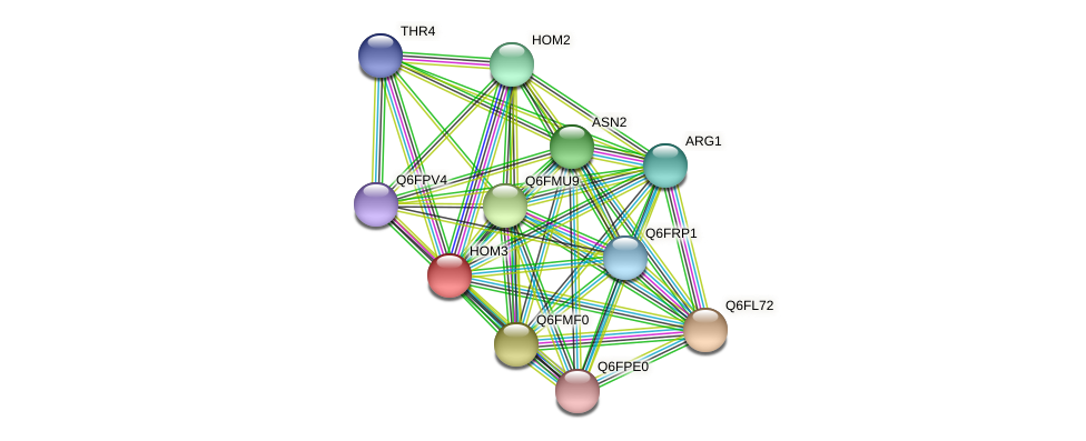 HOM3 protein (Candida glabrata) - STRING interaction network