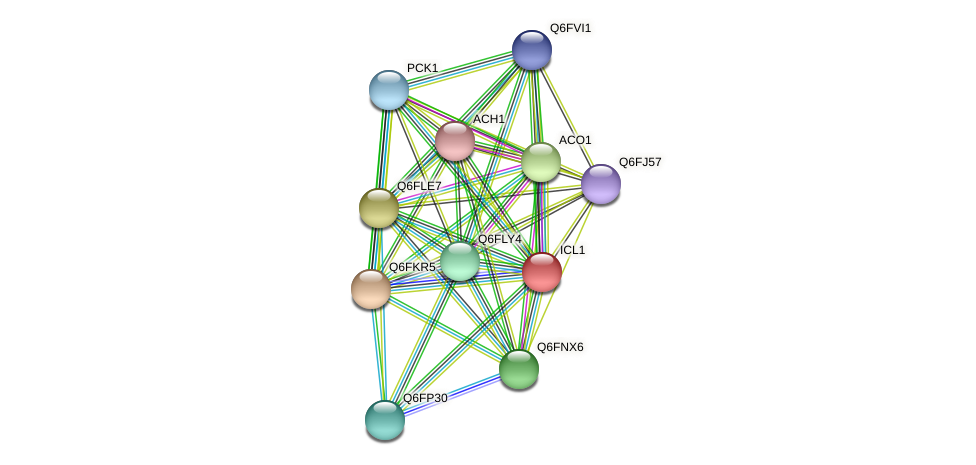 ICL1 protein (Candida glabrata) - STRING interaction network