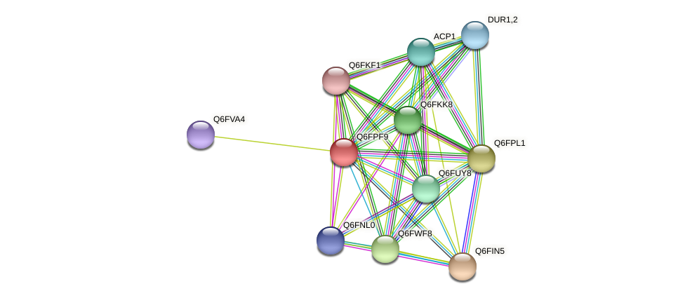 XP_447885.1 protein (Candida glabrata) - STRING interaction network