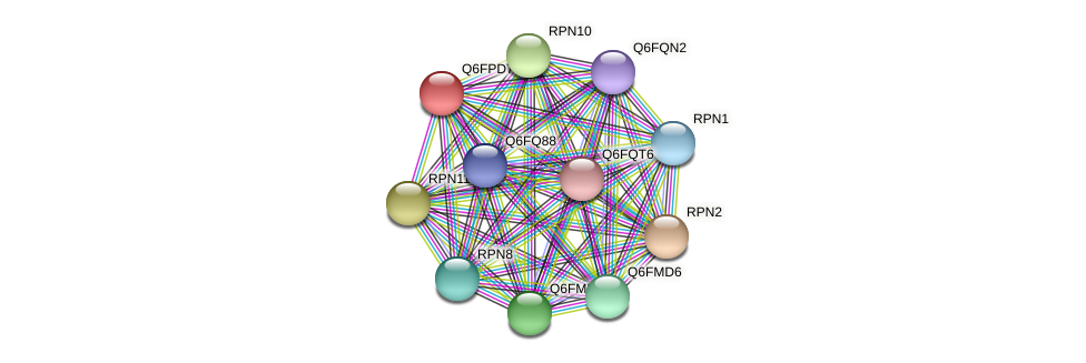 XP_447907.1 protein (Candida glabrata) - STRING interaction network