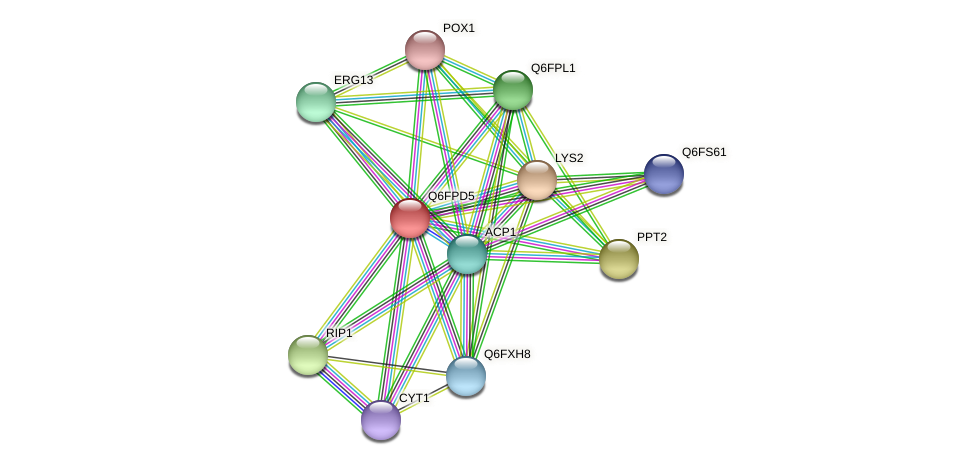 XP_447909.1 protein (Candida glabrata) - STRING interaction network