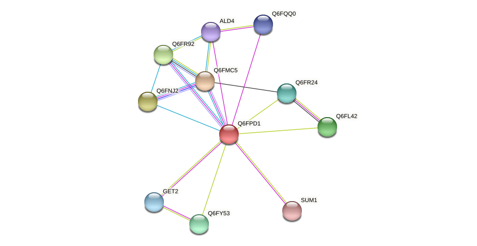 XP_447913.1 protein (Candida glabrata) - STRING interaction network