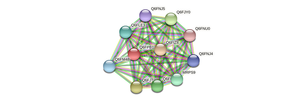 XP_447933.1 protein (Candida glabrata) - STRING interaction network