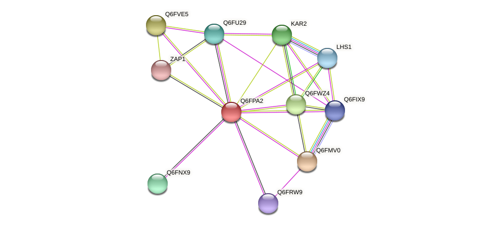 XP_447942.1 protein (Candida glabrata) - STRING interaction network