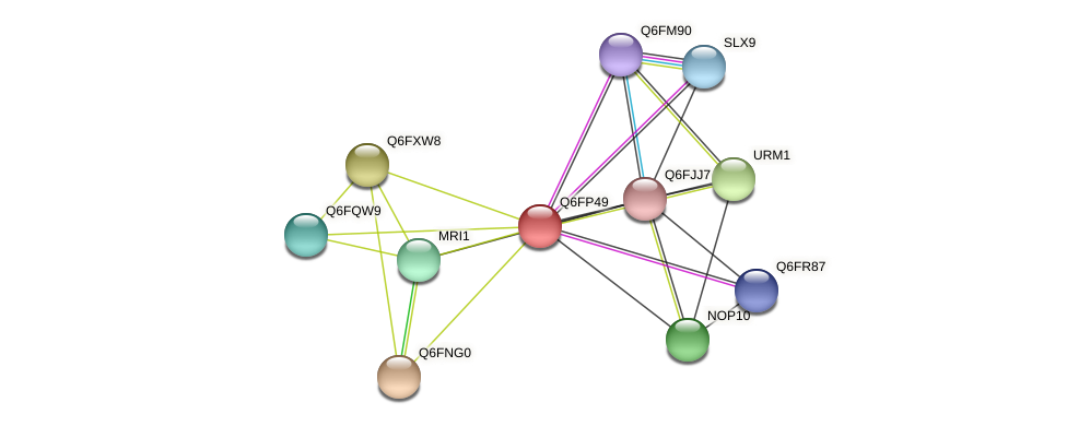 XP_447995.1 protein (Candida glabrata) - STRING interaction network
